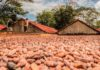 Cargill Invests in Cocoa Plant in Ghana and Ivory Coast